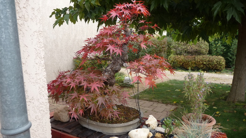 Printemps bonsaï P1060911