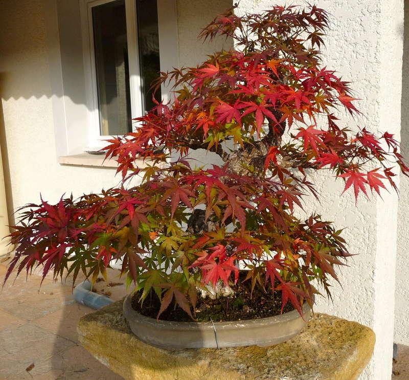 Printemps bonsaï P1070813