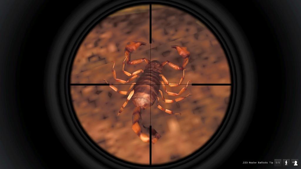 Scorpione in primo piano. 20161010