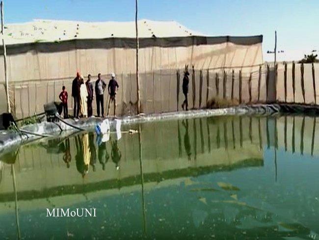Irrigation collective association Touzaikou et Afgraiss  مشروع تزكزاوت   للسقي الجماعي Mimoun23