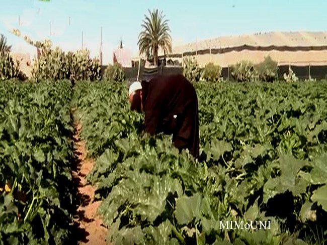 Irrigation collective association Touzaikou et Afgraiss  مشروع تزكزاوت   للسقي الجماعي Mimoun24