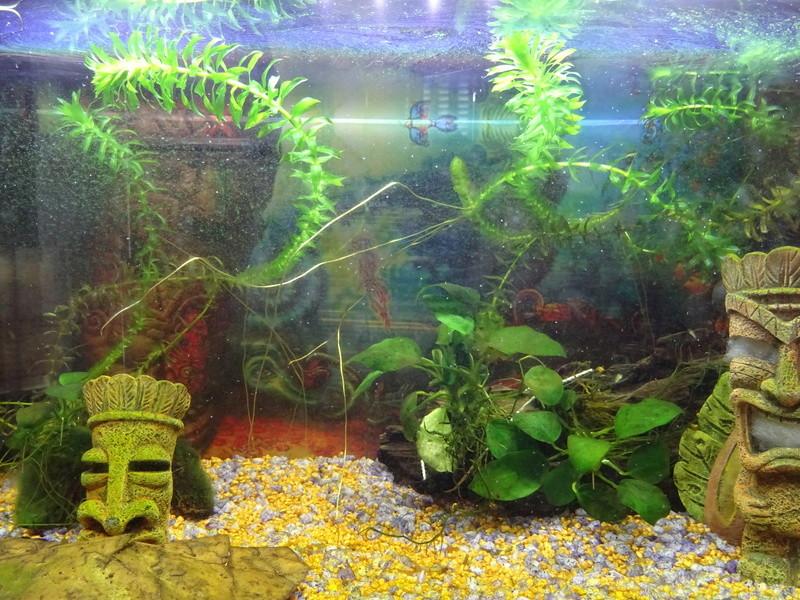 Soucis aquarium en cyclage Dsc00810