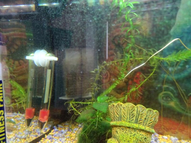 Soucis aquarium en cyclage Dsc00910