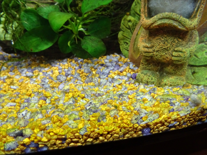 Soucis aquarium en cyclage Dsc00911