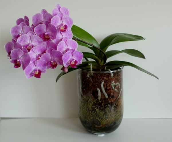Orchideen in Glasvasen 5 (SGK) - Seite 21 Sgk_ph11