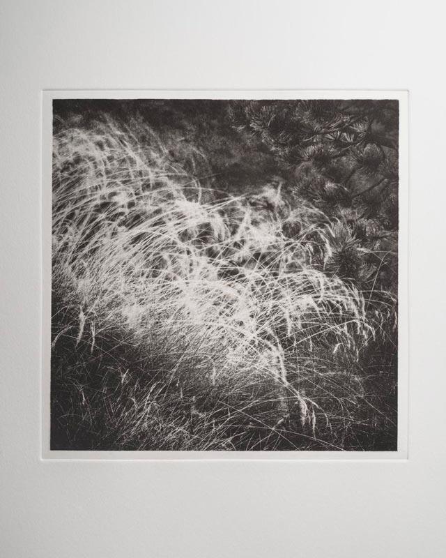 Morsure en Hélio Grass010