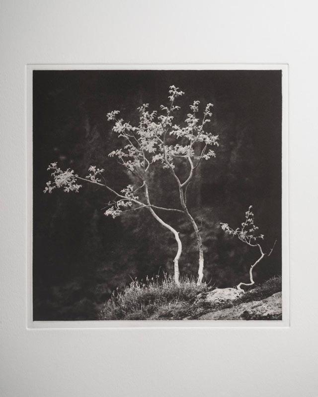 Morsure en Hélio Tree0210