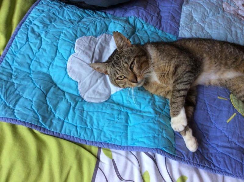 Pacha - chat errant à Erbisoeul Receiv10