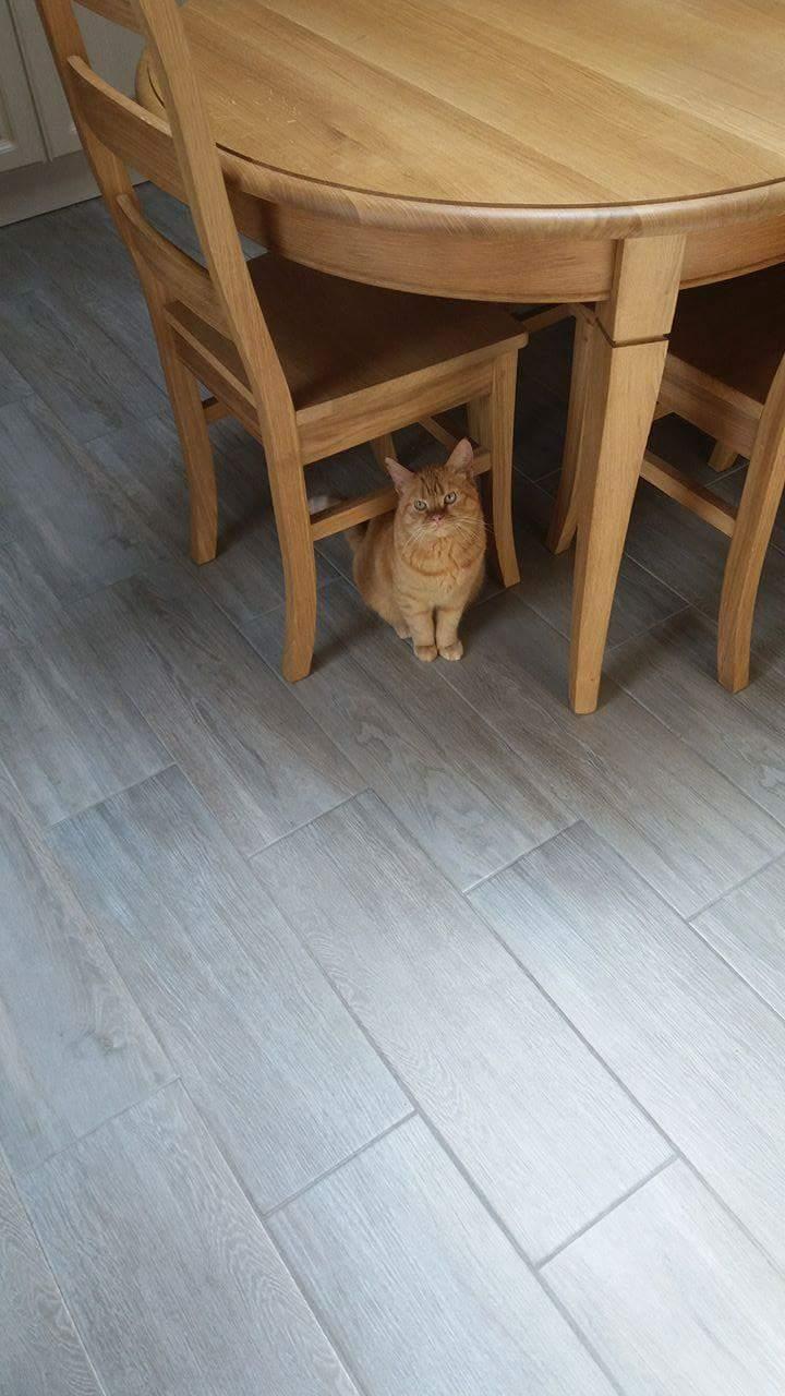 WITCH, très belle chatte de 2 ans roux clair typée British Receiv11