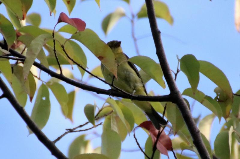Oiseau mystère Img_7312