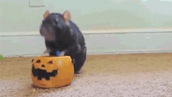 Halloween  200110