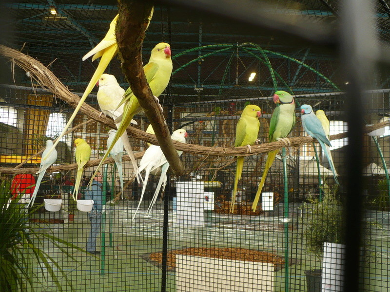 Bourse aux oiseaux à Saint Germain des Prés 81700 Expo_211