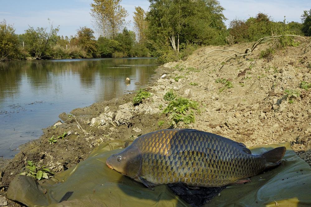Campagne en petite rivière sauvage. - Page 3 _dsc6911