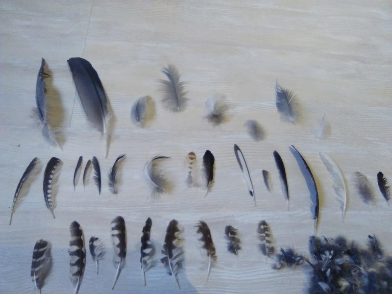 Trouvailles de plumes - Page 2 Img_2051