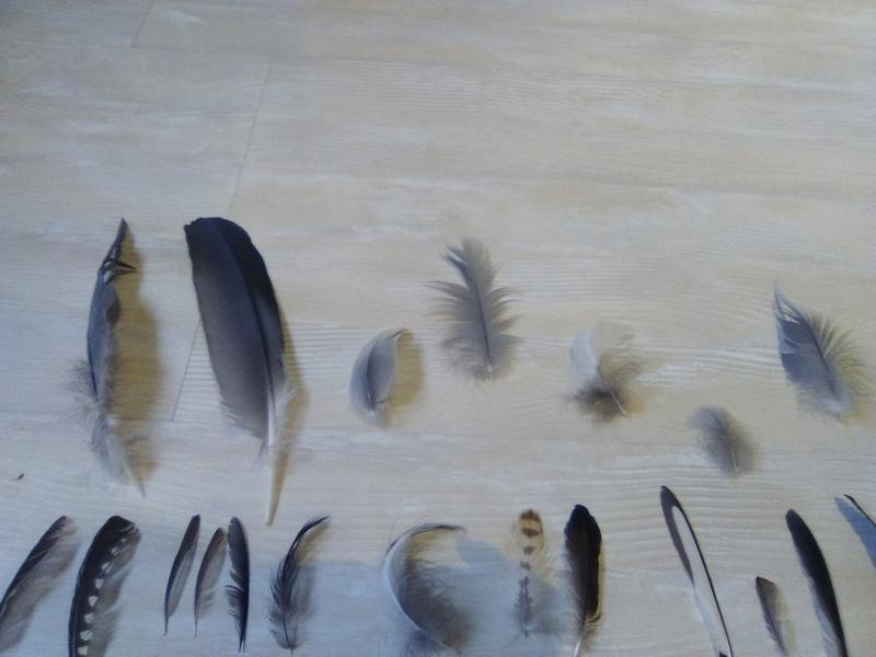 Trouvailles de plumes - Page 2 Img_2052