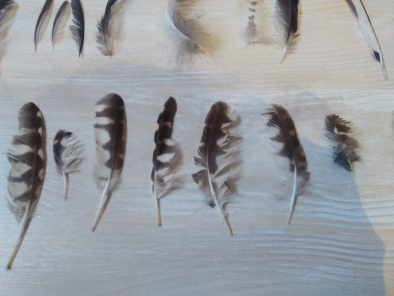 Trouvailles de plumes - Page 2 Img_2053