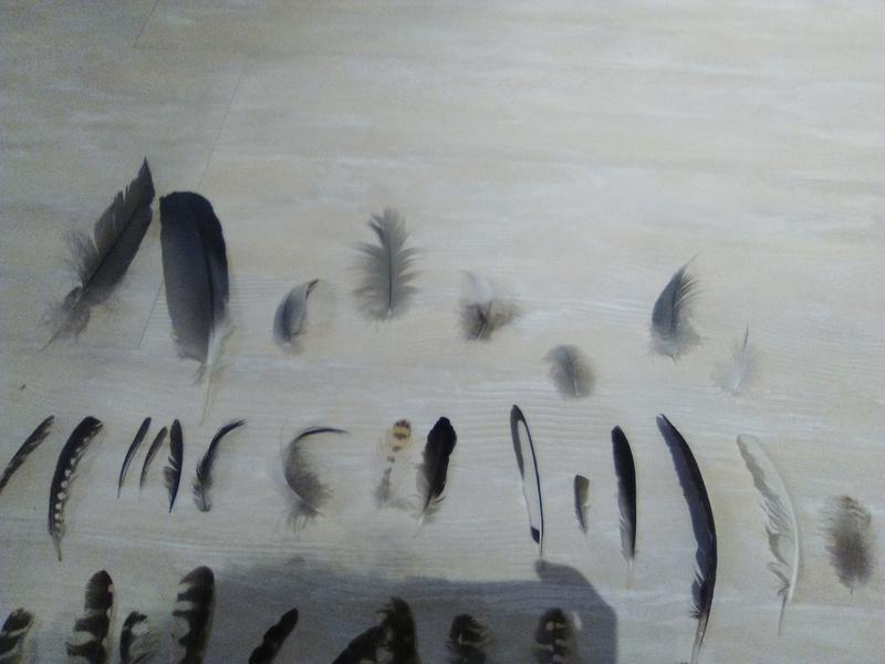 Trouvailles de plumes - Page 2 Img_2056