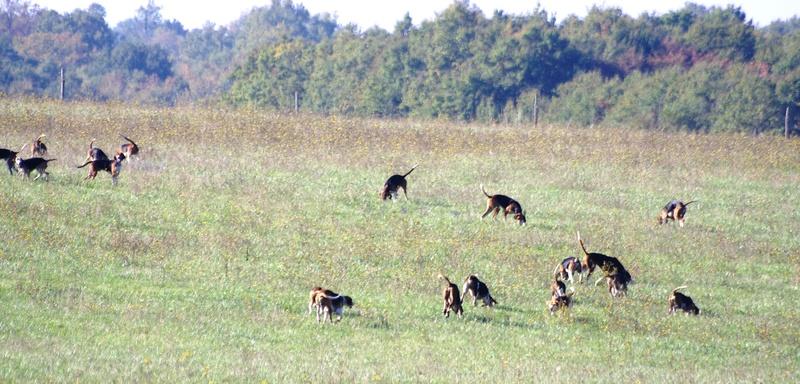 chasse du dimanche 30 octobre 56610