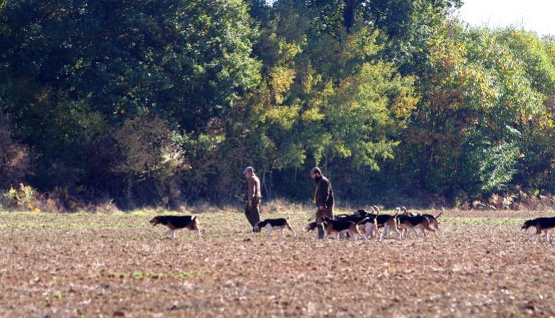 chasse du dimanche 30 octobre 57910