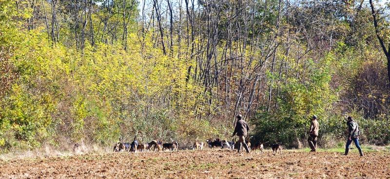 chasse du dimanche 30 octobre 58010