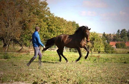 CHERCHEUR DE VERNAY - cheval de sport belge de 2008 - Page 2 Che110