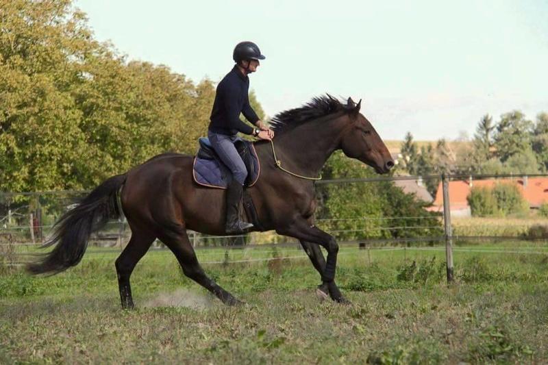 CHERCHEUR DE VERNAY - cheval de sport belge de 2008 - Page 2 Che210