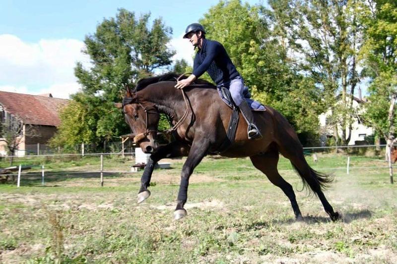 CHERCHEUR DE VERNAY - cheval de sport belge de 2008 - Page 2 Che310
