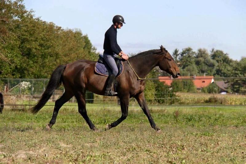 CHERCHEUR DE VERNAY - cheval de sport belge de 2008 - Page 2 Che410