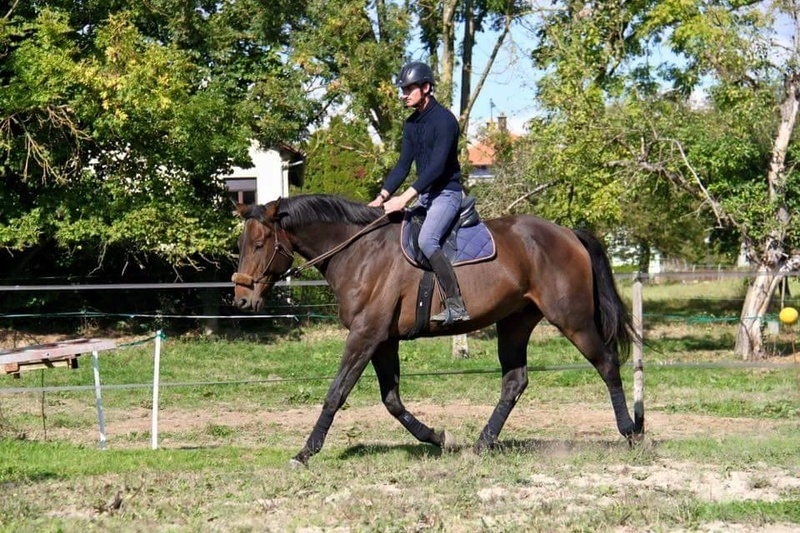 CHERCHEUR DE VERNAY - cheval de sport belge de 2008 - Page 2 Che510