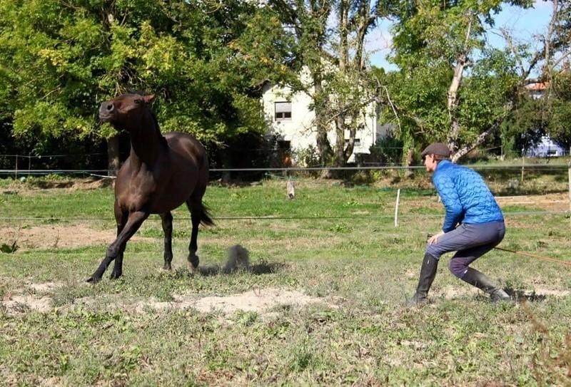 CHERCHEUR DE VERNAY - cheval de sport belge de 2008 - Page 2 Che810