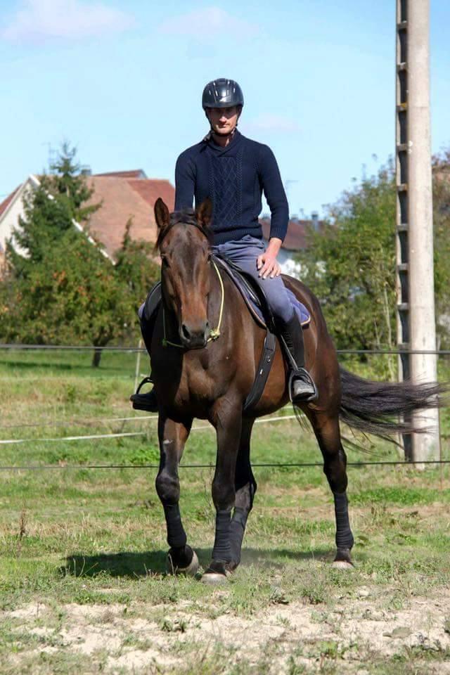CHERCHEUR DE VERNAY - cheval de sport belge de 2008 - Page 2 Che910