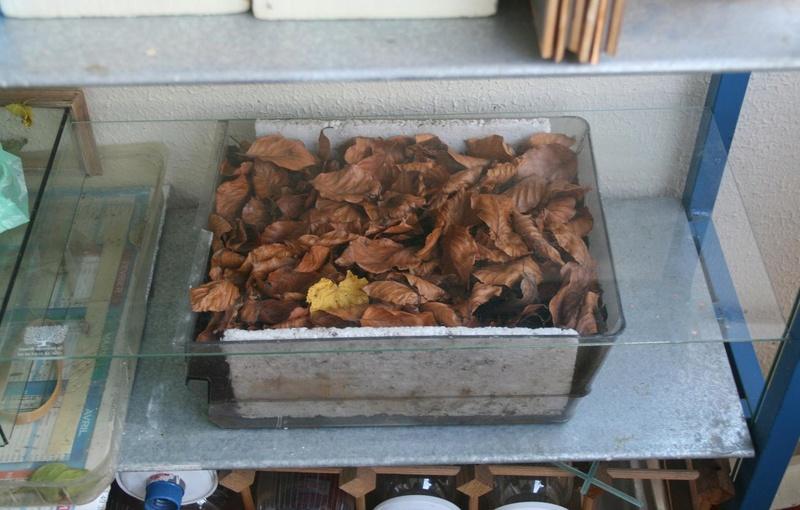 Conservation des chrysalides/cocons hivernants 510