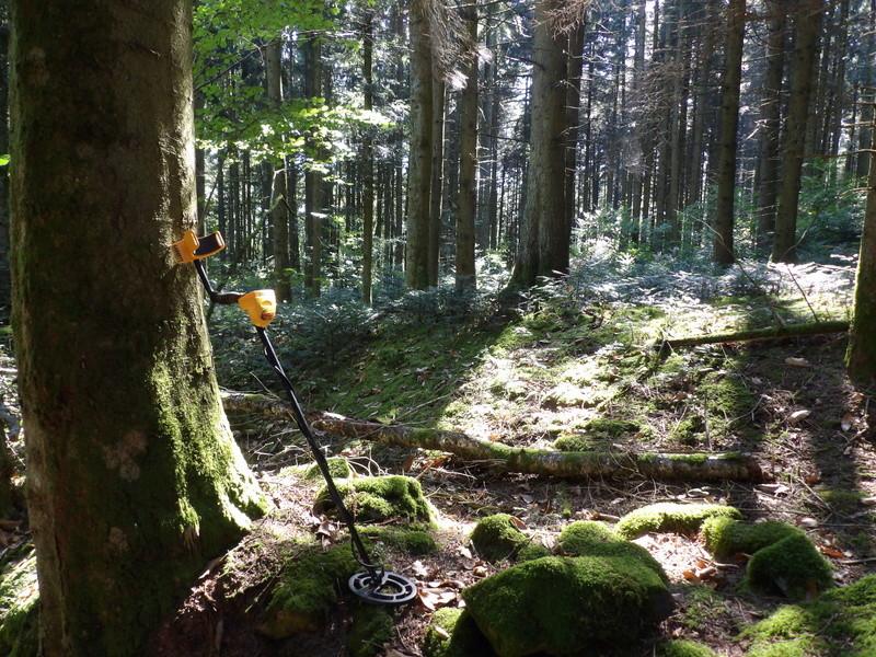 L'appel de la forêt 102_0013
