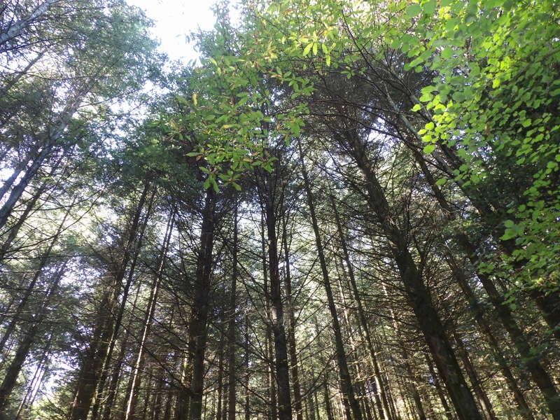 L'appel de la forêt 102_0014