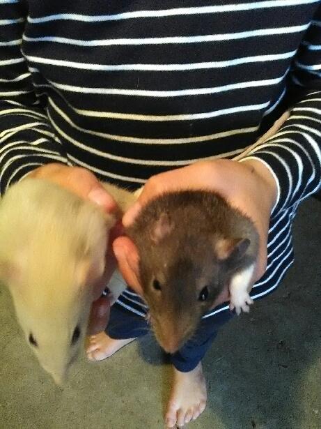URGENT sauvetage de 18 ratons  14743011