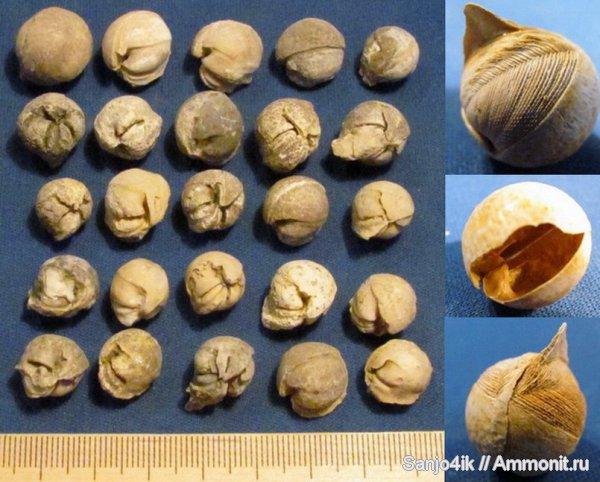 Structures et bois fossiles Jouann10