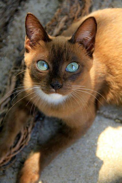 Le temple des chats 25d1e610