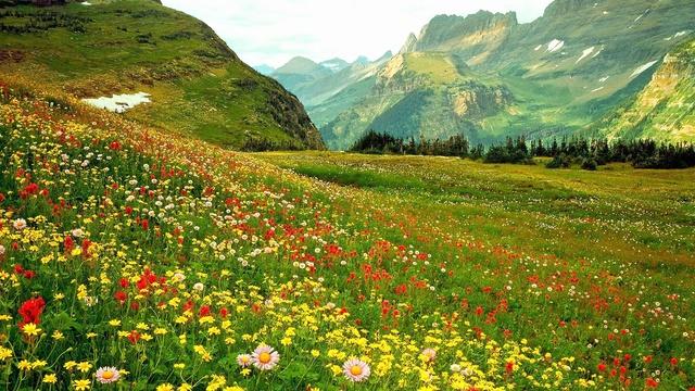 Nos amies les fleurs (Symbolisme) - Page 9 Alpine11