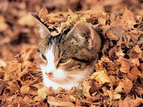 Le temple des chats Tumblr11
