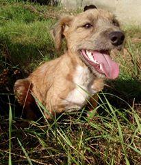 VICTOR un chien en grande souffrance - BULGARIE 14182510