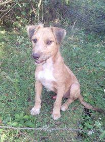 VICTOR un chien en grande souffrance - BULGARIE 14182511