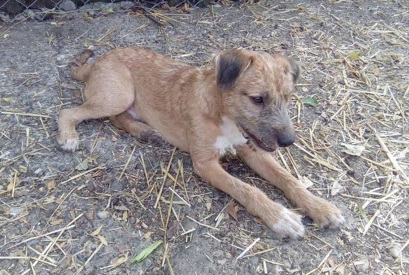 VICTOR un chien en grande souffrance - BULGARIE 14375210
