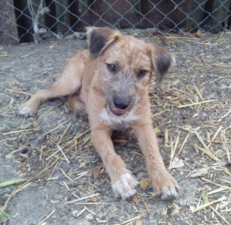 VICTOR un chien en grande souffrance - BULGARIE 14408310