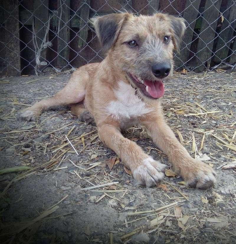 VICTOR un chien en grande souffrance - BULGARIE 14423610
