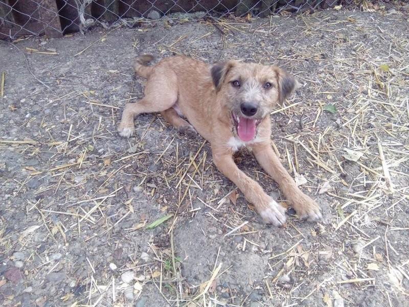 VICTOR un chien en grande souffrance - BULGARIE 14593412