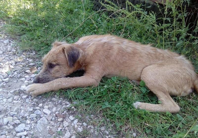 VICTOR un chien en grande souffrance - BULGARIE 14593413