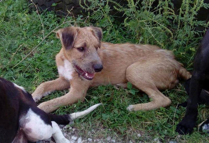 VICTOR un chien en grande souffrance - BULGARIE 14593611