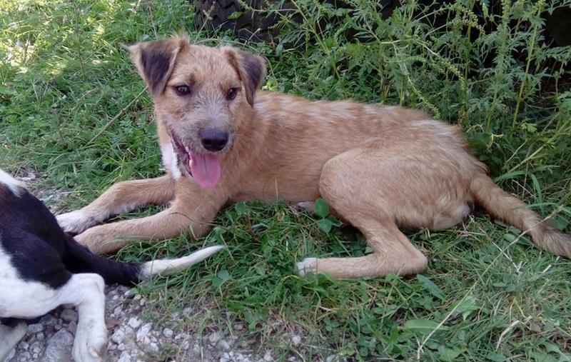 VICTOR un chien en grande souffrance - BULGARIE 14593710