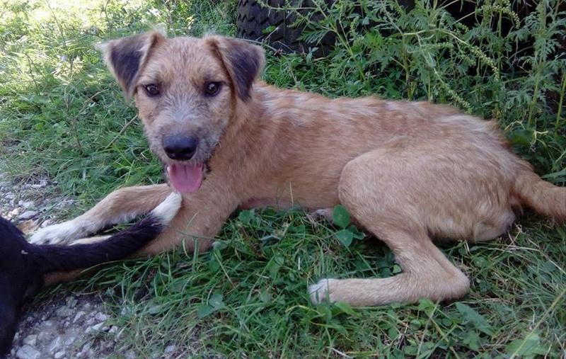VICTOR un chien en grande souffrance - BULGARIE 14627910