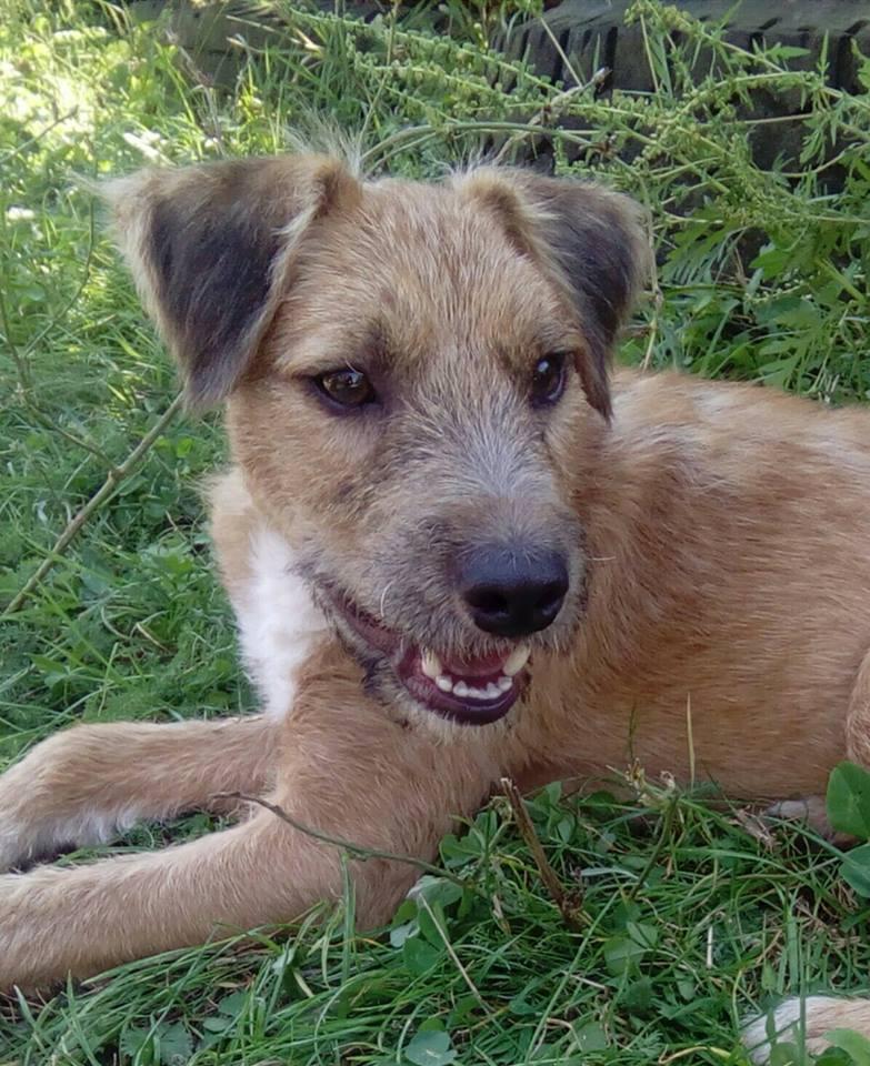 VICTOR un chien en grande souffrance - BULGARIE 14628211